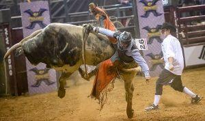 bull, bull riding, rodeo-4988345.jpg